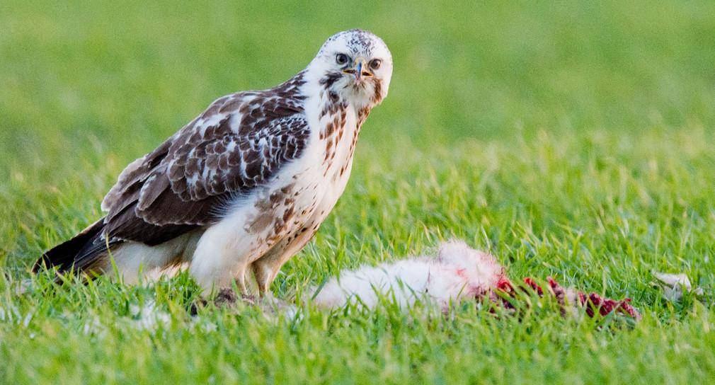 Vogelgrippe Baden-Württemberg